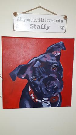 Viv Dykes dog Portrait