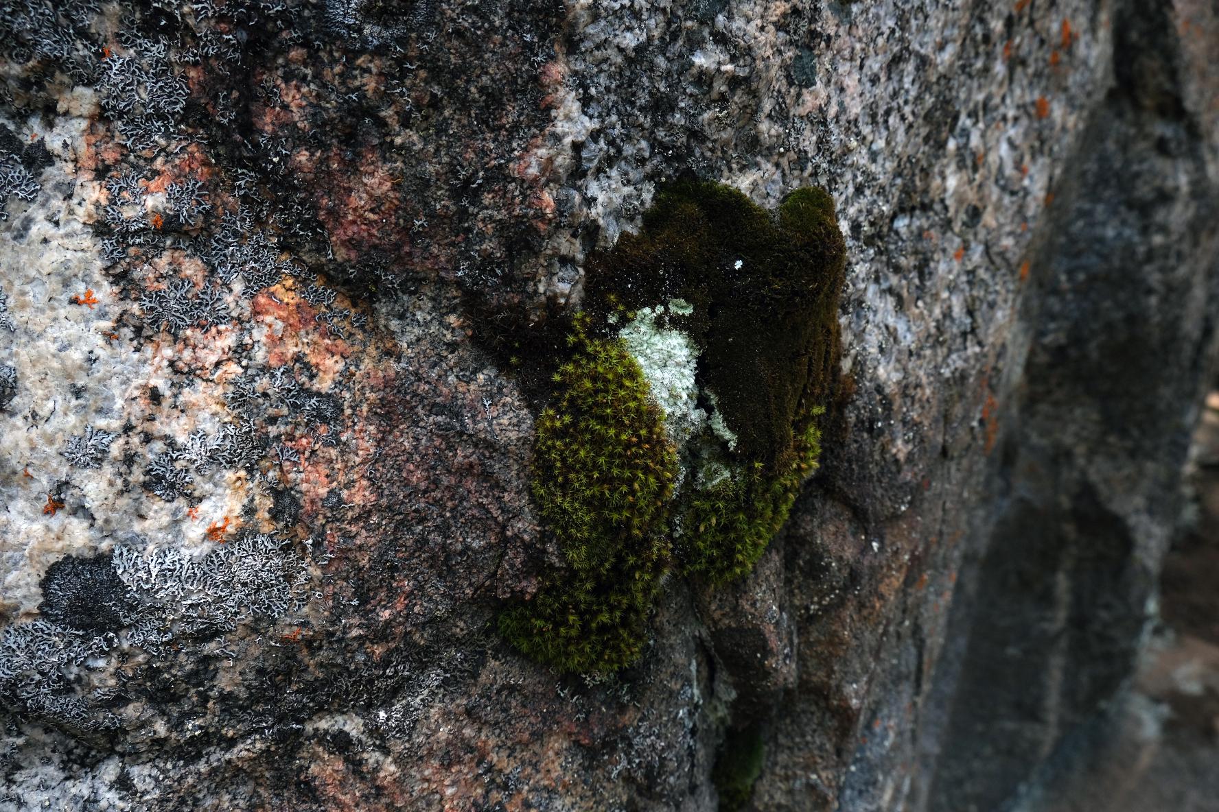 """Lichen, 9""""x 6"""", 2020"""