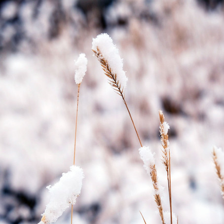 Whispers for Winter