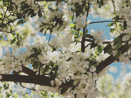 Five Tips for Spring