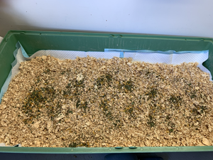 Brooder box with pine shavings and chick blend.