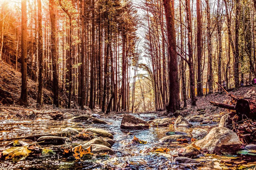travel_danonperdere_foliage_premilcuore_