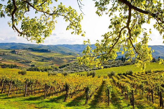 escursioni, firenze, siena, chianti, Slow travel tuscany, e-bike, trekking, wine experience, vino, toscana