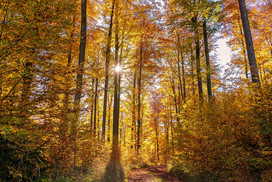 forest-1802486_960_720.jpg