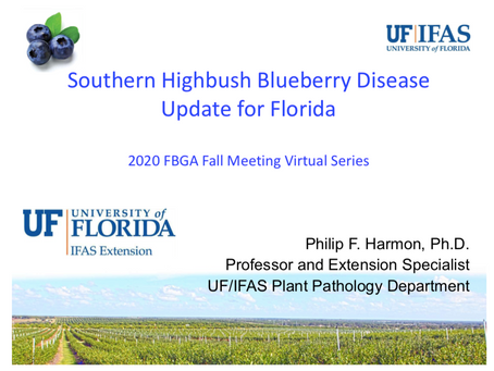 Southern Highbush Blueberry DiseaseUpdate for Florida