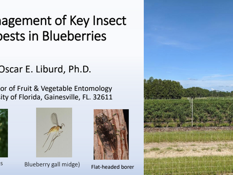 Management of Key Insect pests in Blueberries
