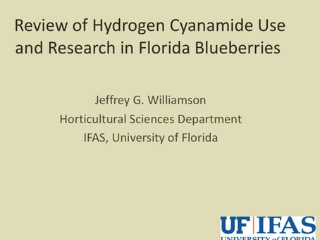 Review of Hydrogen Cyanamide Useand Research in Florida Blueberries