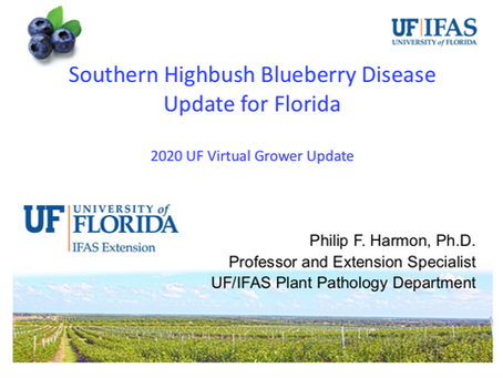Southern Highbush Blueberry Disease Update for Florida