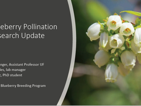 Blueberry Pollination Research Update
