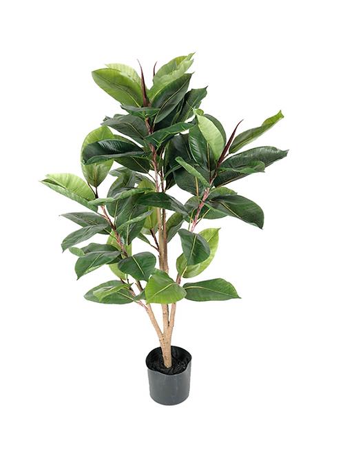 MR PLANT Fikus Robusta 90 cm