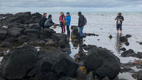 A field guide to seaweed foraging