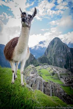 Peru-654
