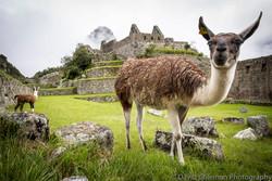 Peru-801