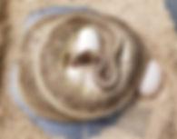 Clutch 36.jpg