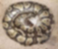 Clutch 21.jpg