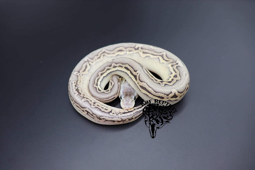 20 Sterling Puzzle Female 1