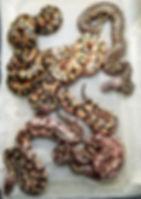 Clutch 21-2.jpg