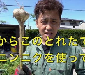 『週刊Ooch Vol.7-2』【動画:ニンニク収穫祭】 by デビ