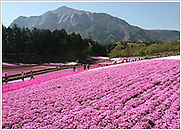 芝桜の丘.jpg
