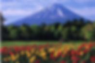 西湖野鳥の森公園.jpg