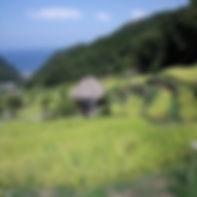 石部の棚田.jpg