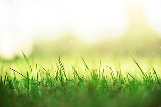 fresh-green-spring-grass-johnnyVegasLans