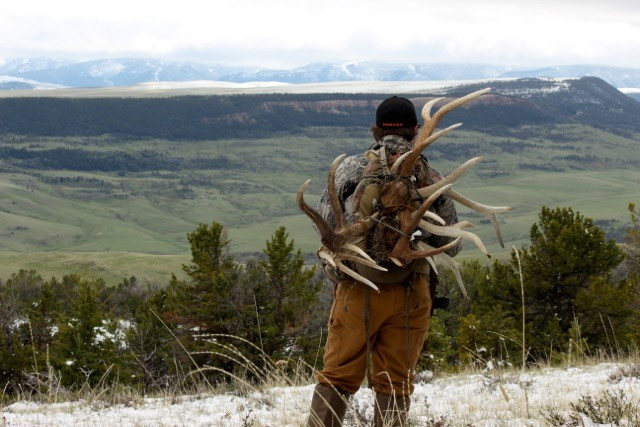 Horn Hunting