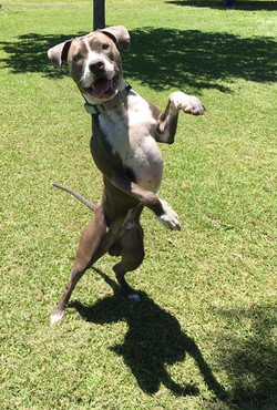 My boy has moves