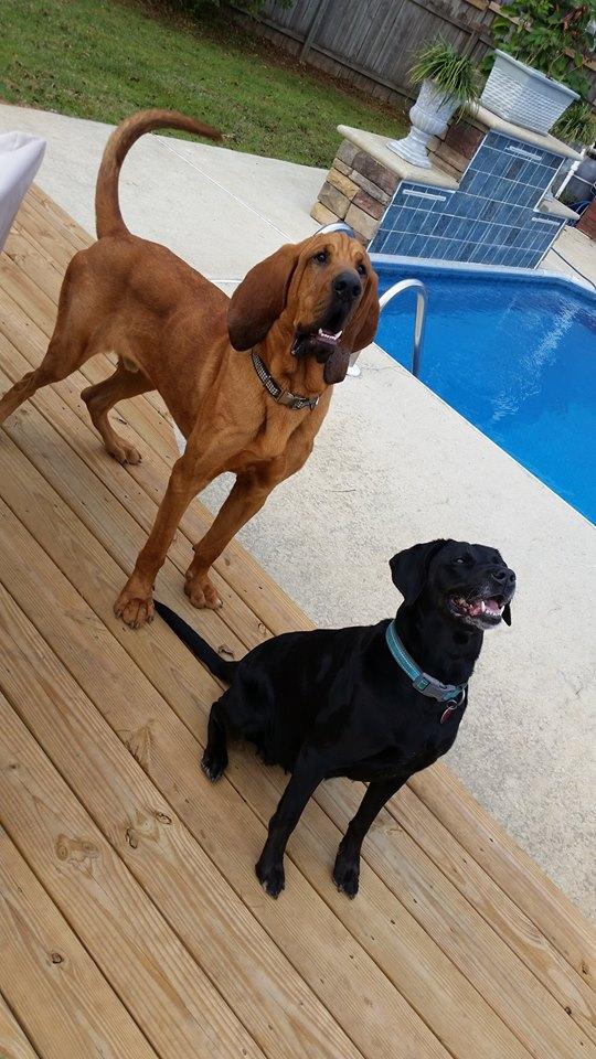 Bear & Murphy