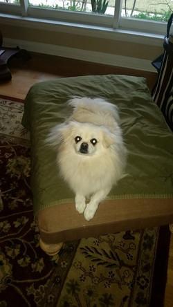Lord Fluffy Bottom