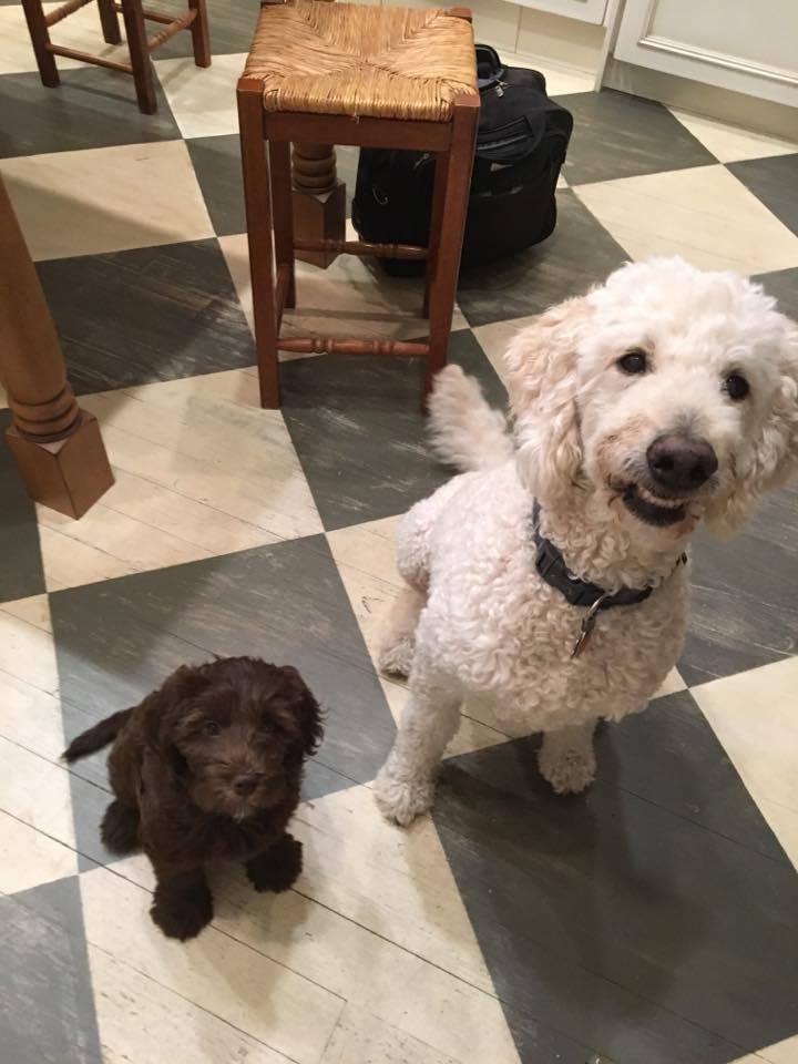 Rosie & Murphy