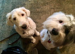 Penny & Buddy