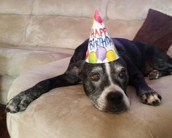 Jasmine's 11th birthday
