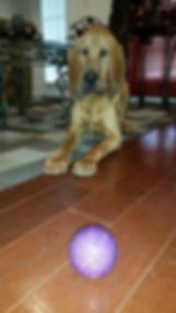 Day Training Mobile Dog Walker Bloodhound