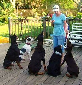 Mobile Dog Training obedience dobermans alabama pit bull