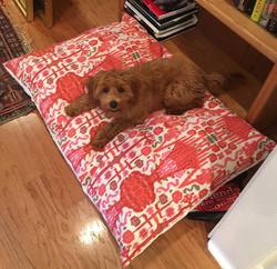 Super Puppy Willa