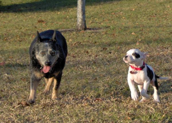 Cajun & Dixie