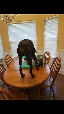 Doberman Mobile Dog Training