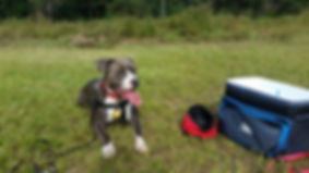 Dog Training Mobile, AL Obedience