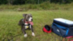 Dog Training Mobile, AL Obedience