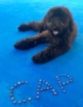 Mobile Dog Training Alabama AL bergamasco puppy