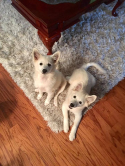 Tucker & Penny