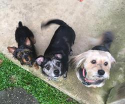 Vinny, Vito & Bonnie