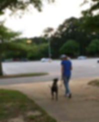 dog training loose leash walking