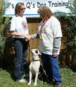 Therapy Dog International Cert