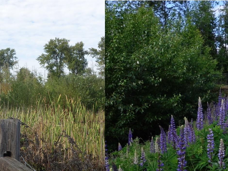 Newton Pond Stewardship Series - September