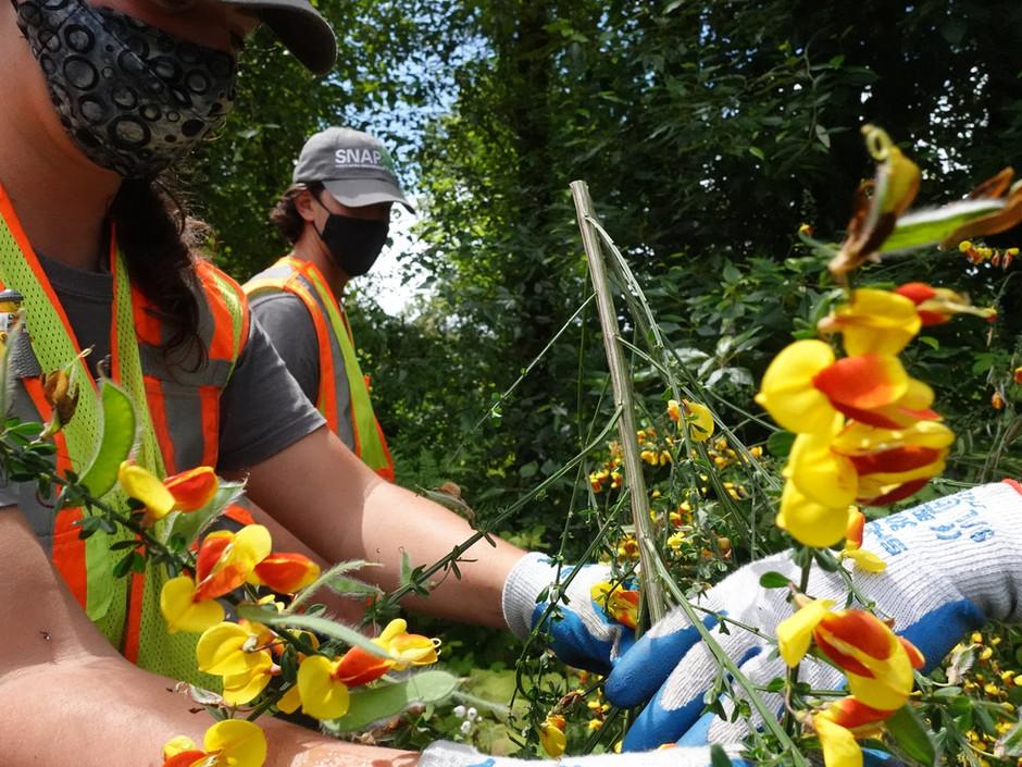 Newton Pond Park Stewardship Series - June