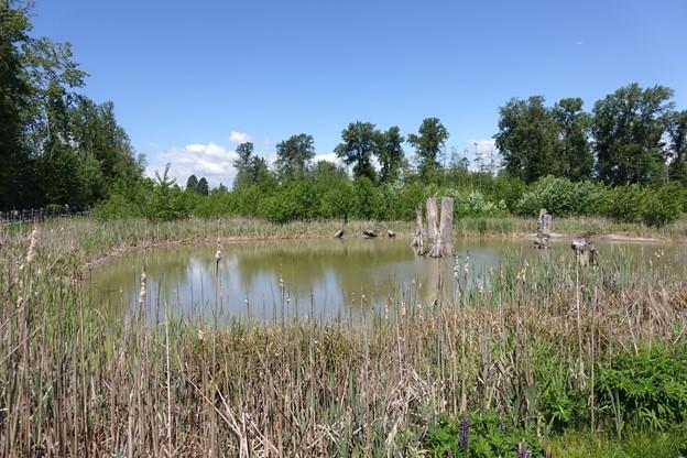 Newton Pond Park Stewardship Series - August