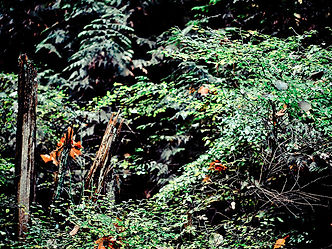 Forest Photograph