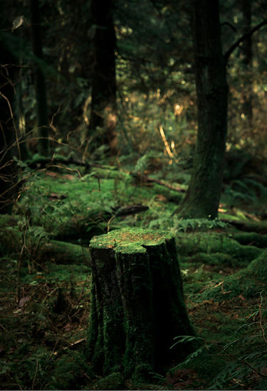 Close-Up of Stump in Urban Forest